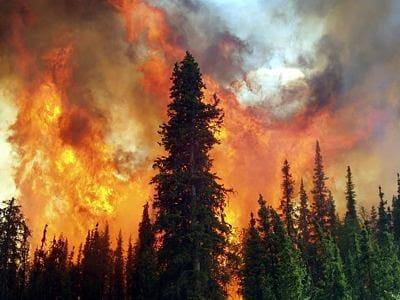 Zaca Fire, 2007